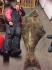 krasser Heilbutt 210cm Ronny Hampel Gardsoya Vega