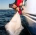 DSC05516_Havsfiskeguiden