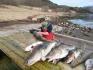 Ytre Skotsfjord gute Dorschfaenge