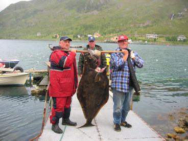 fantatsicher Anglererfolg in Loppa: dicker Heilbutt