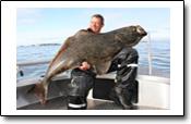 tolles Heilbuttfischen in Norwegen