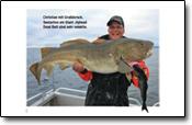 dicke Dorsche und Heilbutte gingen den Anglern bei diesem Reisebericht an den Angelhaken