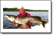 Hechtfischen im norwegischen Stora Lee