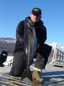 so sehen feister Seelachse aus: hier in Foldvik Brygge