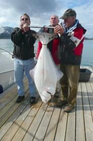 erstklassiger Heilbuttfang in Hansnes Havfiske