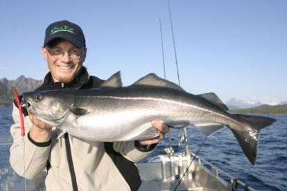 Seelachsfischen vom Feinsten in Norwegen