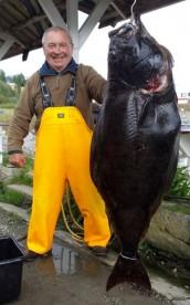 Heilbutt Hamarøy Fiskecamping