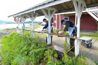 Schlachtbereich in Hamarøy Fiskecamping