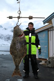 42kg Heilbutt in Loppa Havfiske